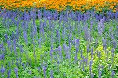 Kleurrijk van velen kleine bloem Stock Foto