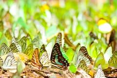 Kleurrijk van vleugels Stock Afbeeldingen