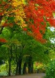 Kleurrijk verlof en dalingsbos Stock Foto
