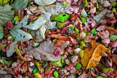 Kleurrijk verlof op het bos Royalty-vrije Stock Foto's