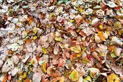 Kleurrijk verlof op het bos Royalty-vrije Stock Afbeeldingen