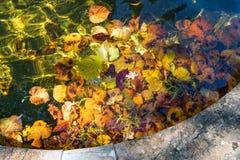 Kleurrijk Zonovergoten Autumn Leaves royalty-vrije stock foto