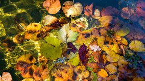 Kleurrijk Zonovergoten Autumn Leaves royalty-vrije stock fotografie