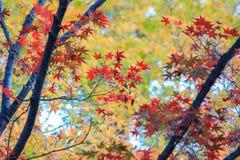 Kleurrijke aard tijdens de herfstperiode Royalty-vrije Stock Afbeeldingen
