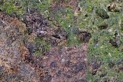 Kleurrijke abstracte achtergrond van bemoste vulkanische tuff rots stock foto