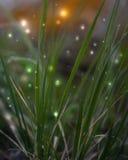 Kleurrijke abstracte foto Gras Royalty-vrije Stock Foto's