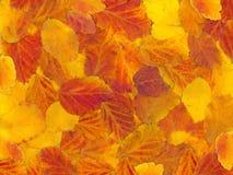 Kleurrijke achtergrond Royalty-vrije Stock Foto's