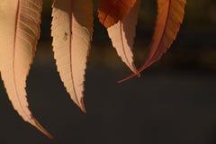 Kleurrijke achtergrond van de herfstblad met insect royalty-vrije stock afbeeldingen