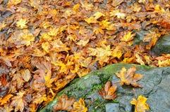 Kleurrijke achtergrond van de herfstbladeren royalty-vrije stock foto