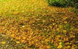 Kleurrijke achtergrond van gevallen de herfstbladeren Stock Foto's