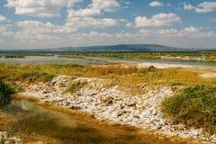 Kleurrijke algen bij de kusten van Meer Nakuru, Kenia royalty-vrije stock fotografie