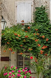 Kleurrijke Architectuur in Montenegro Stock Foto