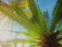 Kleurrijke Artistieke palmen stock afbeelding