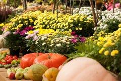 Kleurrijke asters en rijpe pompoenen en appelen royalty-vrije stock afbeeldingen