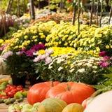 Kleurrijke asters en rijpe pompoenen en appelen royalty-vrije stock foto's