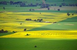 Kleurrijke Australische Weiden Stock Afbeeldingen