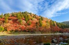 Kleurrijke Autumn Leaf en Rivier met blauwe hemel stock afbeeldingen