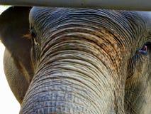 Kleurrijke Aziatische die olifant bij het Park van de Olifantsaard in Noordelijk Thailand wordt gevonden stock foto