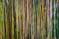 Kleurrijke bamboestelen Stock Foto