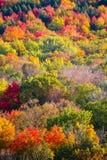Kleurrijke Beboste Heuvel Stock Foto