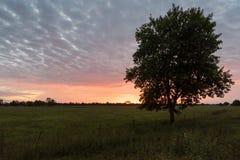 Kleurrijke Bewolkte Zonsopgang en Groene Gebied en Bomen stock afbeelding