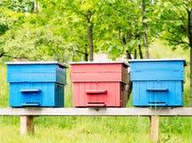 Kleurrijke Bijenkorven Stock Foto's