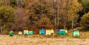 Kleurrijke Bijenkorven Royalty-vrije Stock Foto
