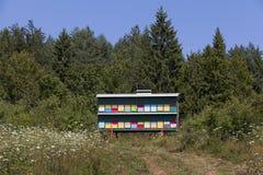 Kleurrijke bijenkorven op groene achtergrond Royalty-vrije Stock Afbeeldingen