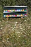 Kleurrijke bijenkorven op groene achtergrond Royalty-vrije Stock Afbeelding