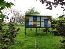 Kleurrijke bijenkorven op het gebied Royalty-vrije Stock Afbeeldingen