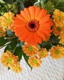 Kleurrijke binnenbloemen Stock Foto's