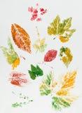 Kleurrijke bladafdruk Royalty-vrije Stock Afbeeldingen