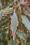 Kleurrijke bladeren stock foto