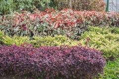 Kleurrijke bladeren stock fotografie
