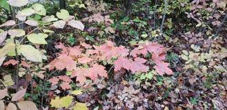 Kleurrijke bladeren royalty-vrije stock fotografie