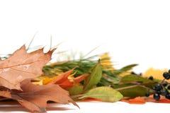 Kleurrijke bladeren royalty-vrije stock foto