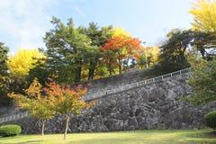 Kleurrijke bladeren Royalty-vrije Stock Afbeeldingen