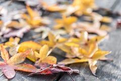 Kleurrijke bladeren royalty-vrije stock afbeelding