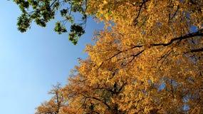 Kleurrijke Bladeren in Autumn With Blue Sky Stock Foto's