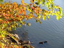 Kleurrijke bladeren boven het water Stock Foto's