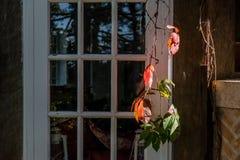 Kleurrijke bladeren in daling dichtbij een vensterbank Stock Foto