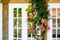 Kleurrijke bladeren in daling dichtbij een vensterbank Royalty-vrije Stock Fotografie