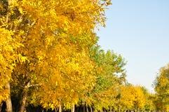 Kleurrijke bladeren in de Herfst en ochtendzonlicht royalty-vrije stock afbeeldingen