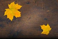 Kleurrijke bladeren in de herfst op houten raad De scène van de herfst de kleurrijke achtergrond Stock Afbeelding