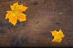 Kleurrijke bladeren in de herfst op houten raad De scène van de herfst de kleurrijke achtergrond Stock Foto's