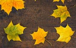 Kleurrijke bladeren in de herfst op houten raad De scène van de herfst de kleurrijke achtergrond Royalty-vrije Stock Fotografie