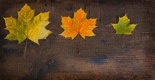 Kleurrijke bladeren in de herfst op houten raad De scène van de herfst de kleurrijke achtergrond Stock Afbeeldingen
