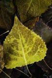 Kleurrijke bladeren in de herfstbos Royalty-vrije Stock Foto