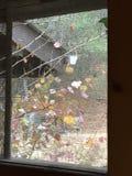 Kleurrijke bladeren door het venster Stock Afbeeldingen