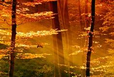 Kleurrijke bladeren in het bos met zonnestraal Stock Afbeelding